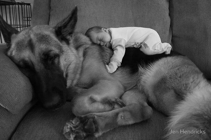 adorabili-grandi-cani-con-bambini