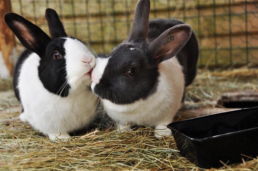 adorabili-animali-baci-amore