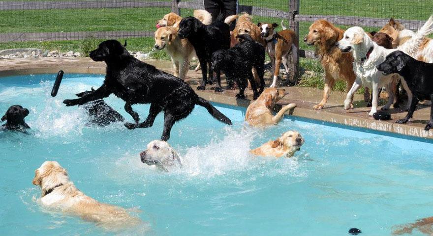 Se vi siete mai chiesti com 39 una festa in piscina alla pensione per cani eccola keblog for How to train your dog to swim in the pool