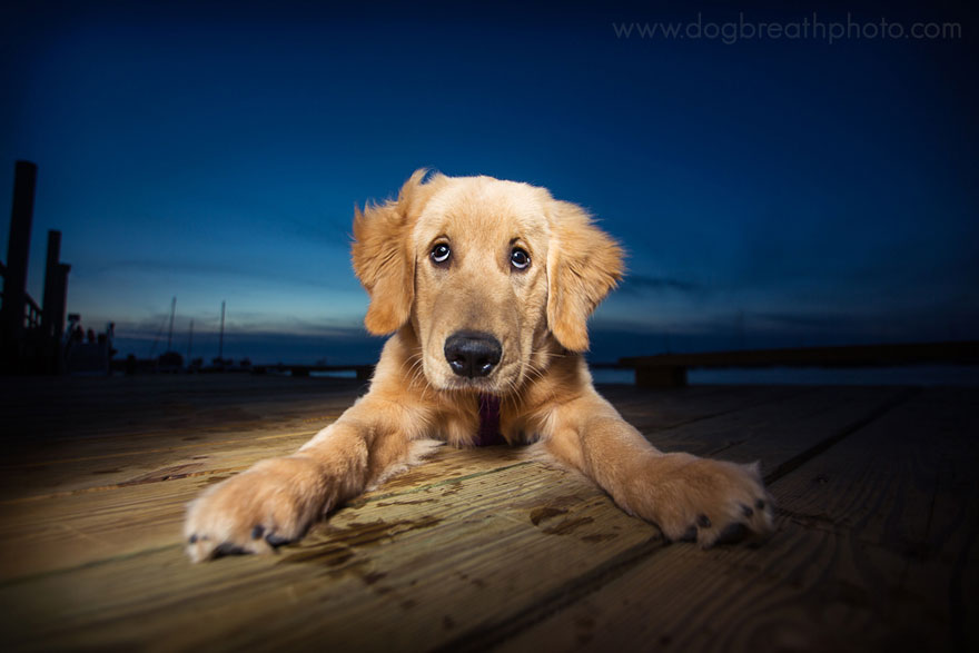 cane-cani-fotografia-kaylee-greer