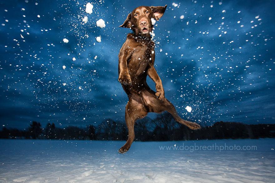 cane-cani-fotografia