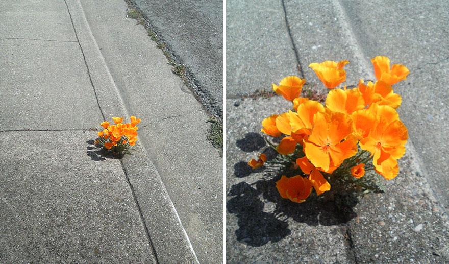 fiori-piante-alberi-crescono-cemento-asfalto