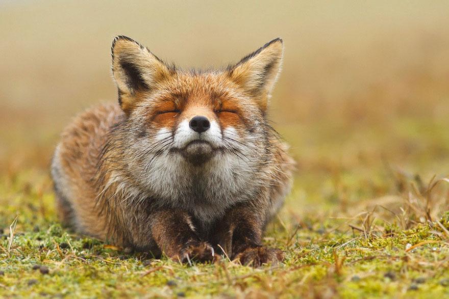 volpi-roeselien-raimond