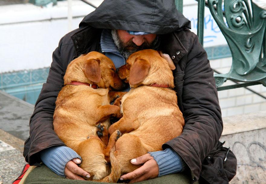cani-senza-tetto-barboni