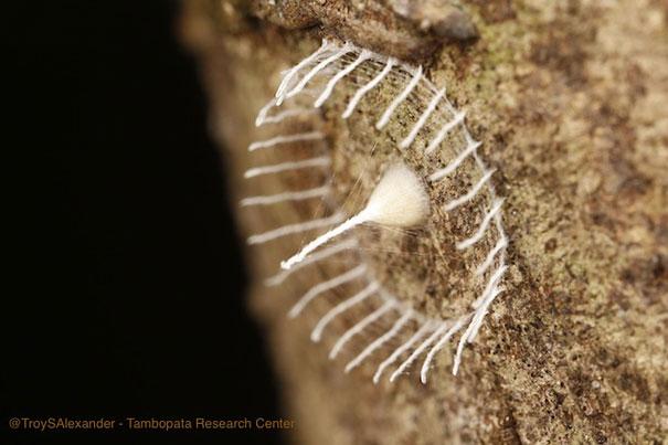 misteriosa-staccionata-struttura-insetto