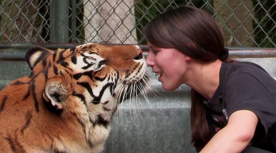 tigri-domestiche-cattività