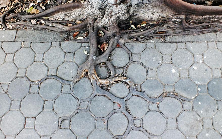 radici-alberi-cemento-asfalto