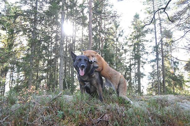 insolite-amicizie-specie-animali
