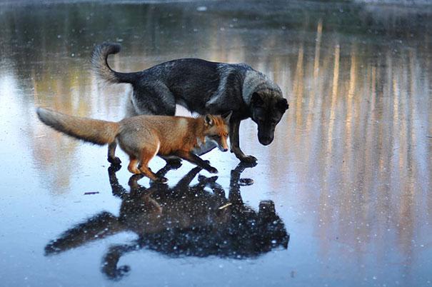 insolite-amicizia-specie-animali