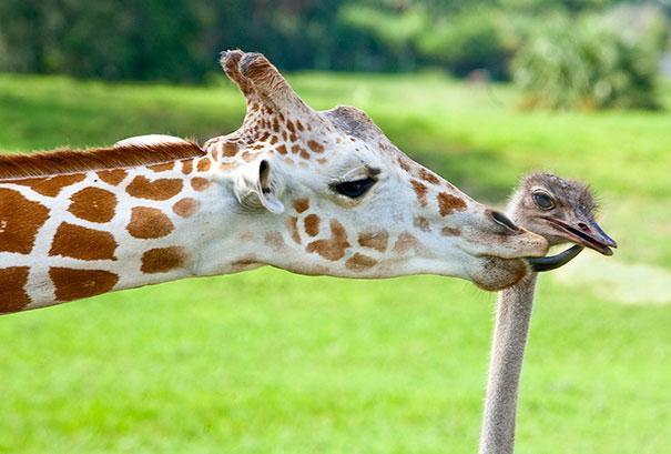 insolita-amicizia-specie-animali
