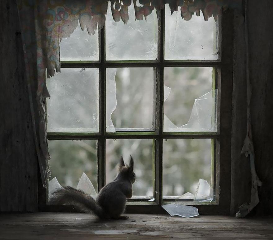 animali-che-guardano-dalla-finestra-01