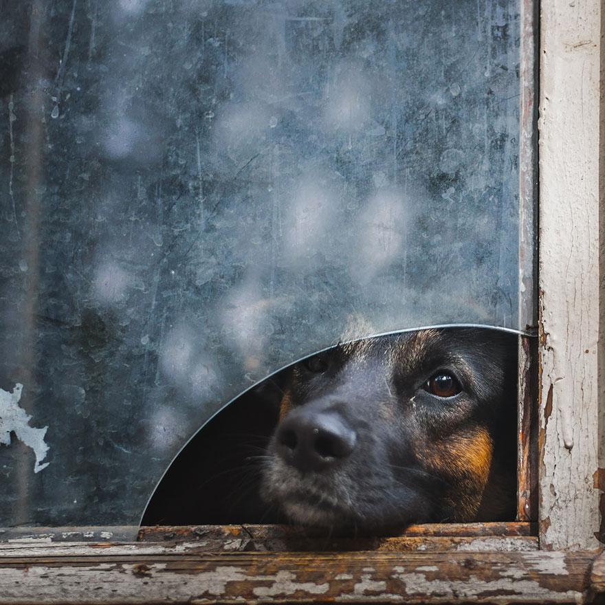 animali-che-guardano-dalla-finestra-02