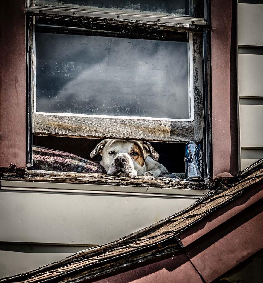 animali-che-guardano-dalla-finestra-04