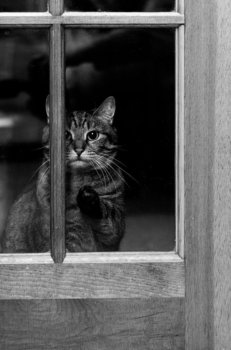 animali-che-guardano-dalla-finestra-05