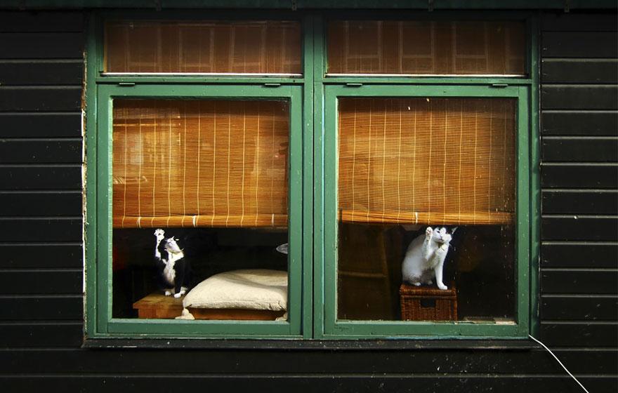 animali-che-guardano-dalla-finestra-06