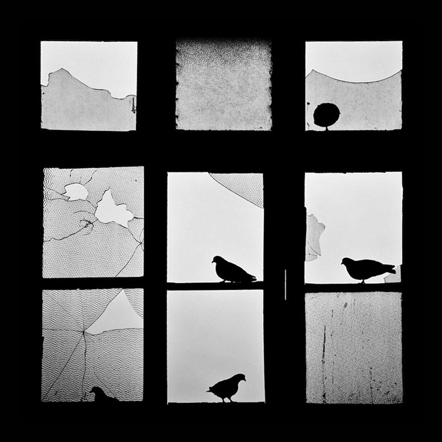 animali-che-guardano-dalla-finestra-07