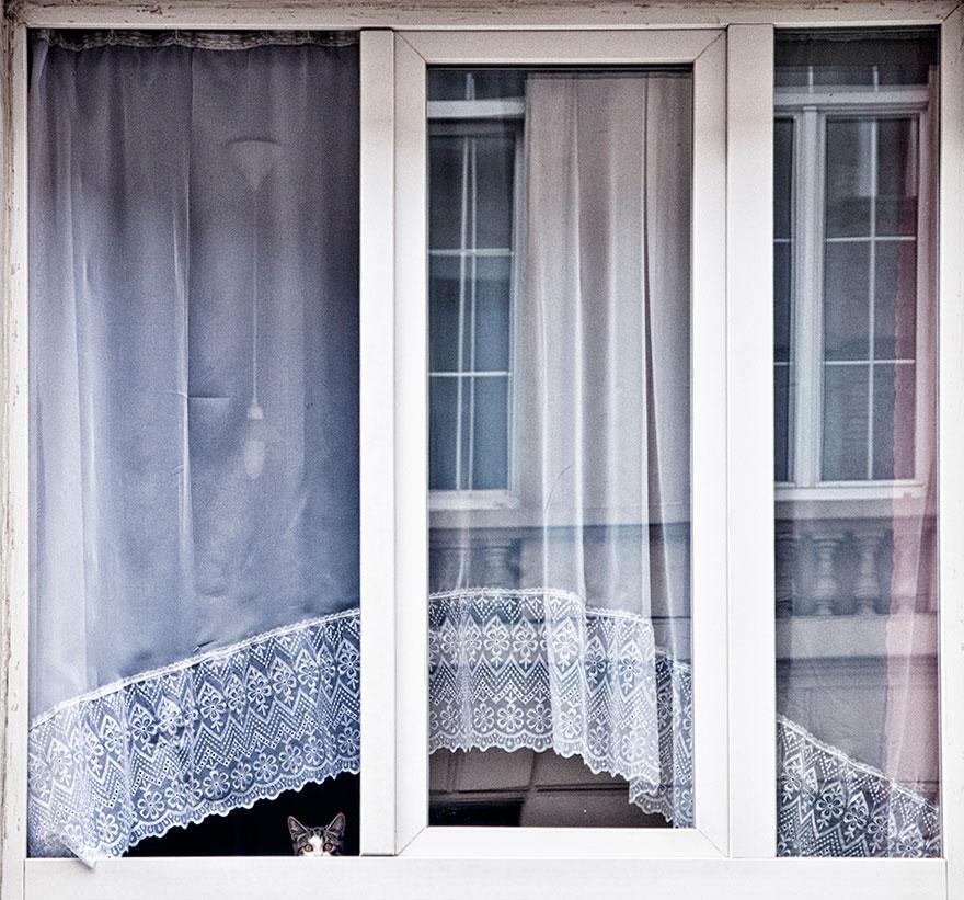 animali-che-guardano-dalla-finestra-08