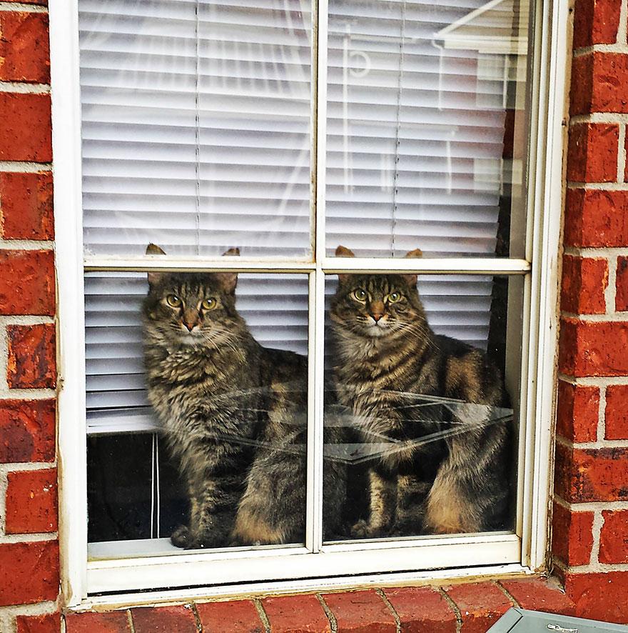 animali-che-guardano-dalla-finestra-09
