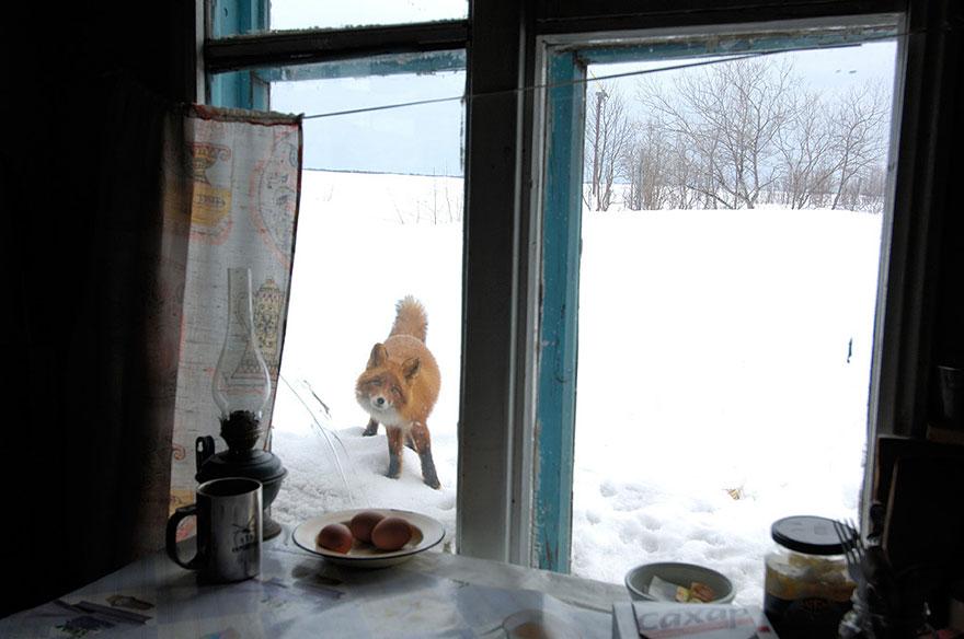 animali-che-guardano-dalla-finestra-10