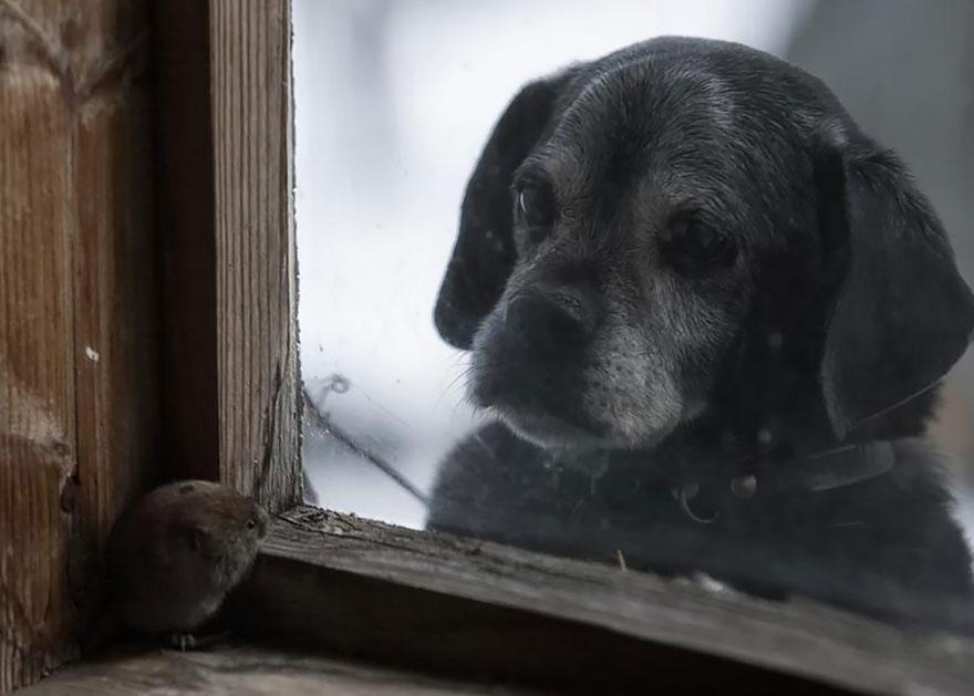 animali-che-guardano-dalla-finestra-11