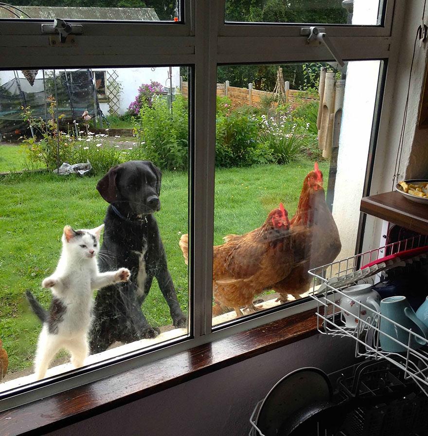 animali-che-guardano-dalla-finestra-12