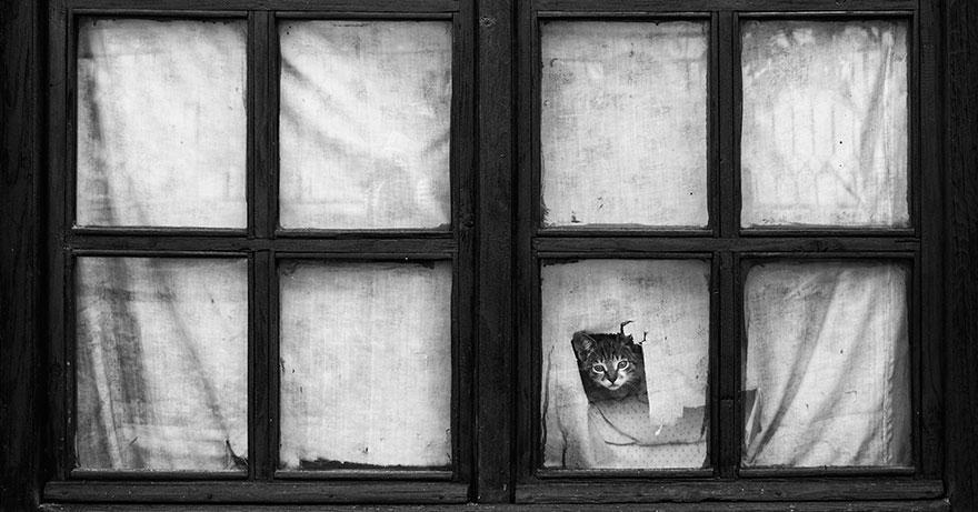 animali-che-guardano-dalla-finestra-13