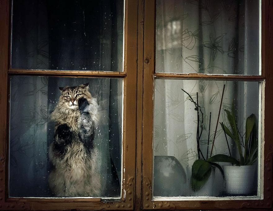 animali-che-guardano-dalla-finestra-14