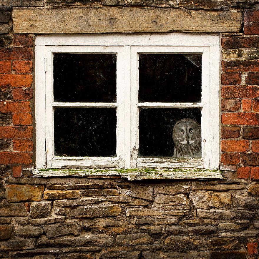 animali-che-guardano-dalla-finestra-15