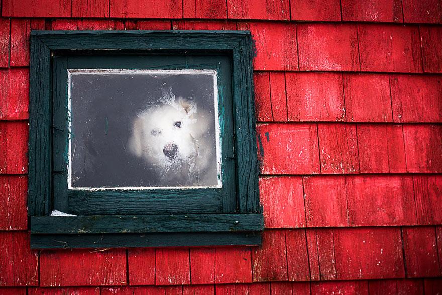 animali-che-guardano-dalla-finestra-16