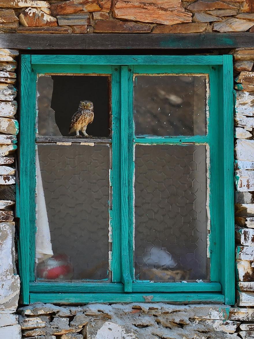animali-che-guardano-dalla-finestra-17