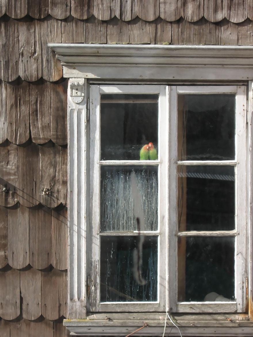 animali-che-guardano-dalla-finestra-18