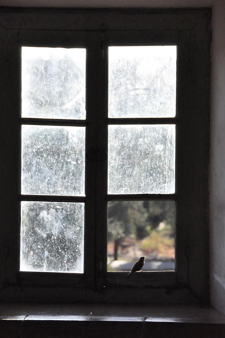 animali-che-guardano-dalla-finestra-19