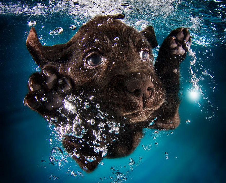 Risultati immagini per cane in acqua