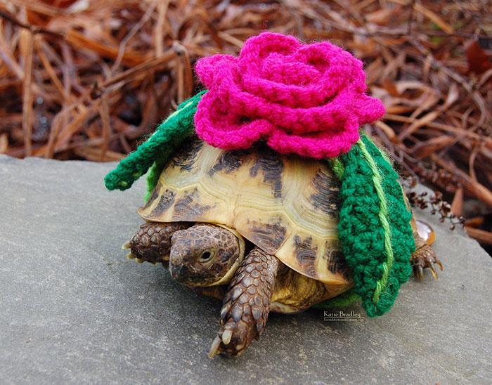 vestitini-maglioncini-per-tartarughe-uncinetto
