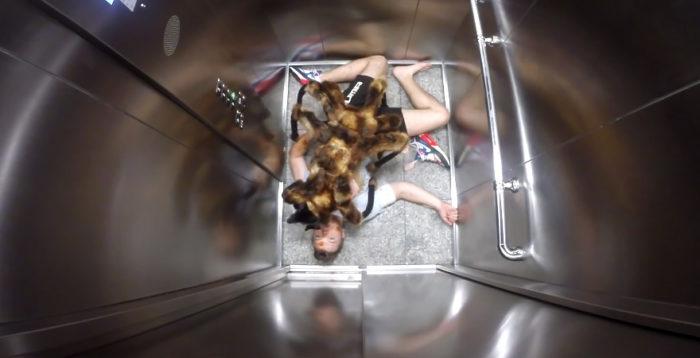 scherzo-ragno-gigante-cane