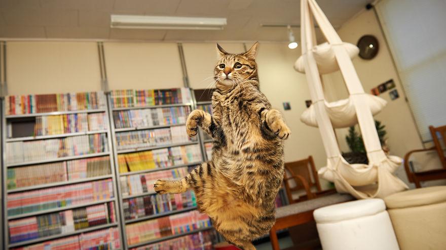 foto-gatti-saltano-ninja-giocano-01