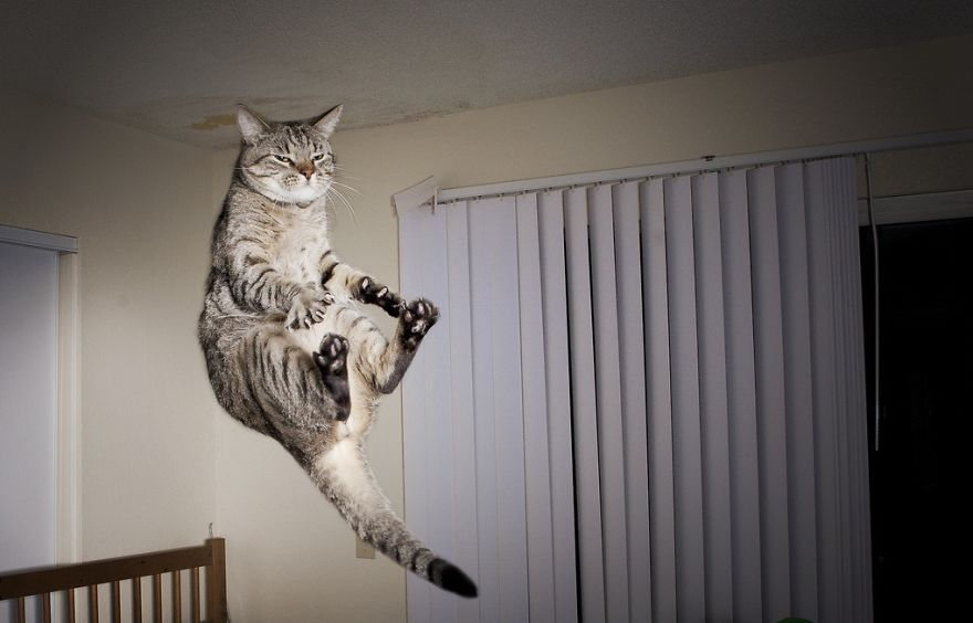 foto-gatti-saltano-ninja-giocano-02
