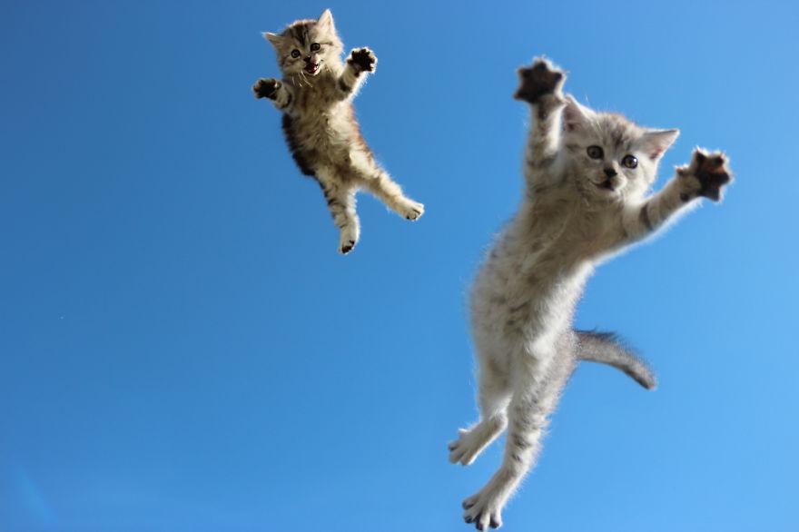 foto-gatti-saltano-ninja-giocano-03