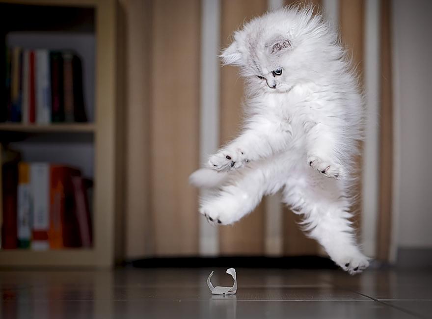 foto-gatti-saltano-ninja-giocano-04