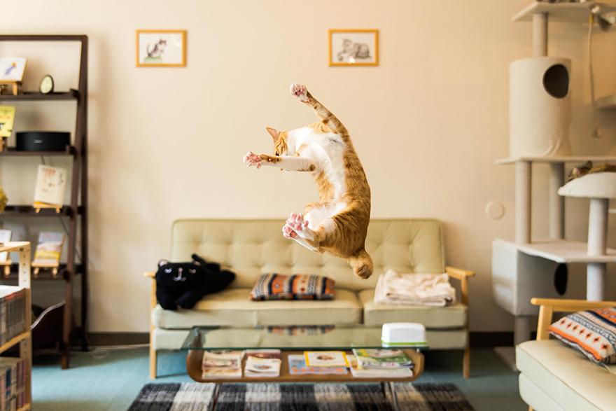 foto-gatti-saltano-ninja-giocano-05