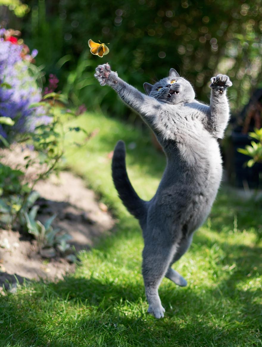foto-gatti-saltano-ninja-giocano-07