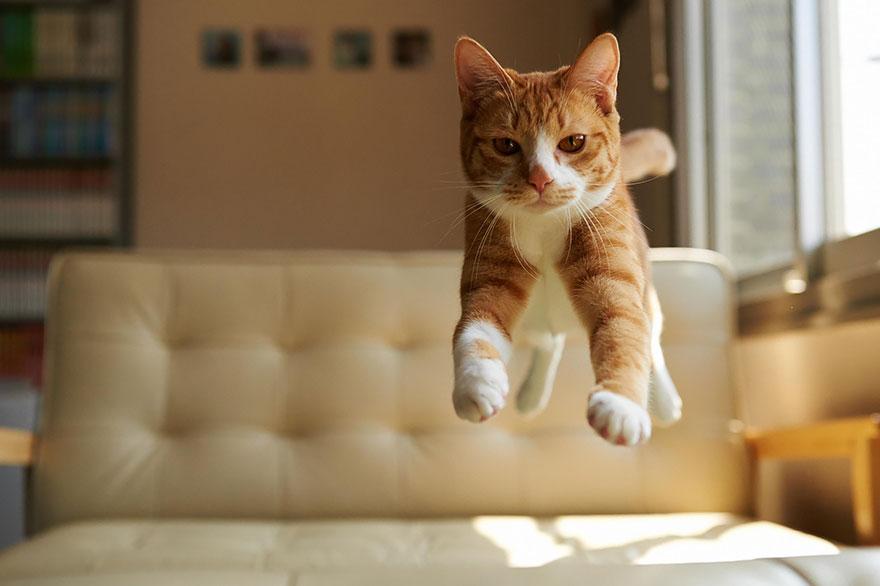 foto-gatti-saltano-ninja-giocano-08