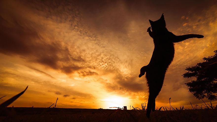 foto-gatti-saltano-ninja-giocano-09