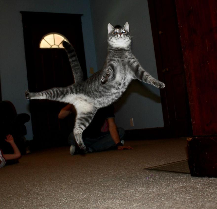 foto-gatti-saltano-ninja-giocano-10