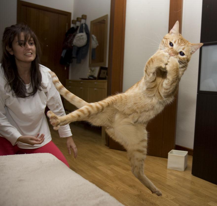 foto-gatti-saltano-ninja-giocano-12