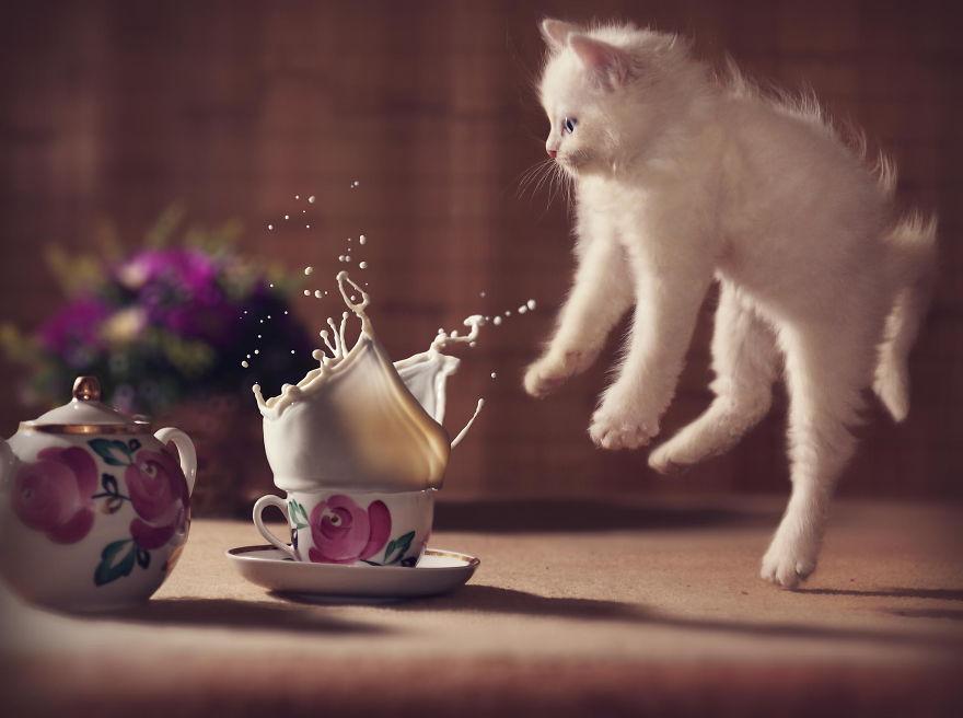 foto-gatti-saltano-ninja-giocano-22