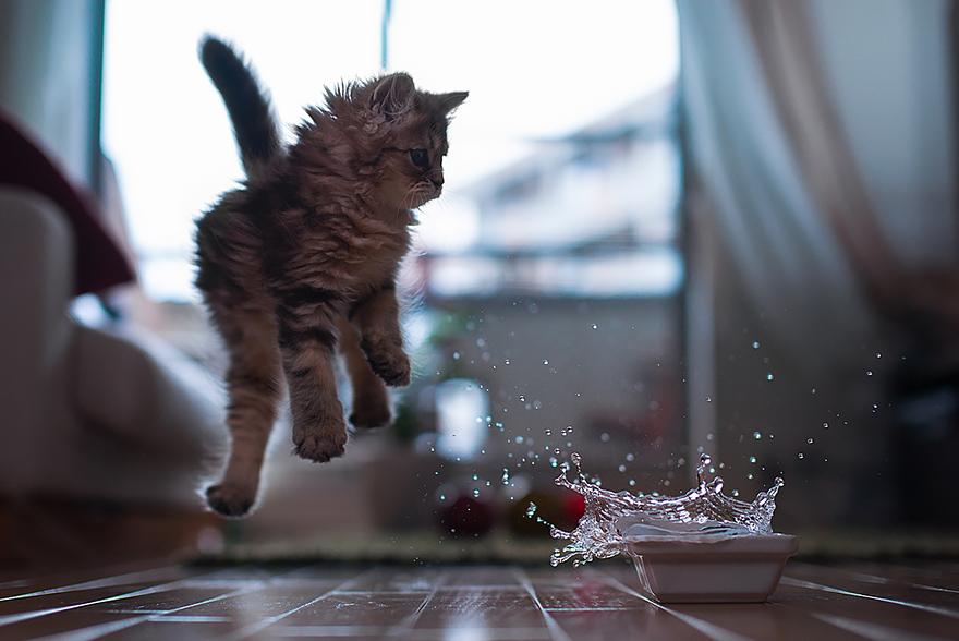 foto-gatti-saltano-ninja-giocano-23