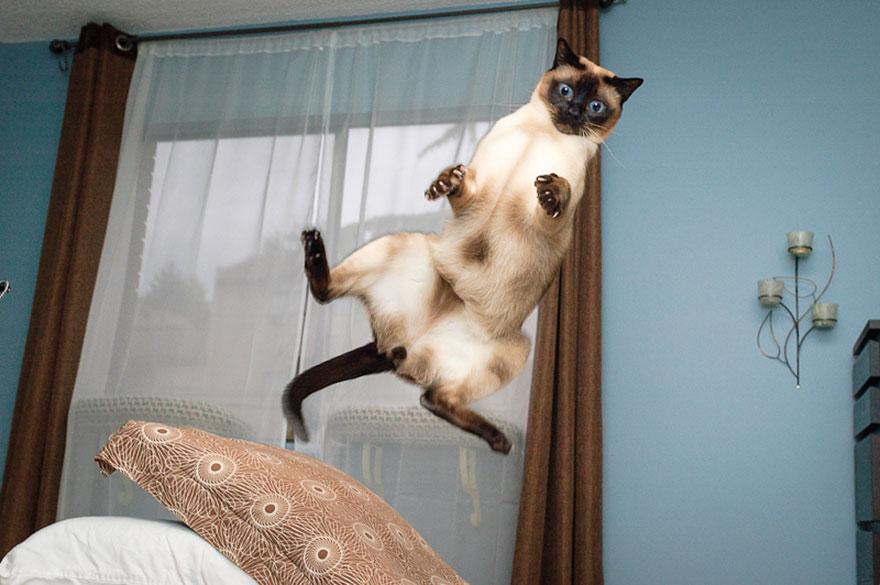 foto-gatti-saltano-ninja-giocano-24