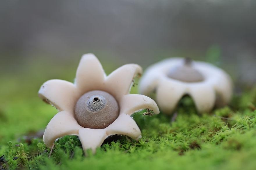 fotografia-funghi-interessanti.01