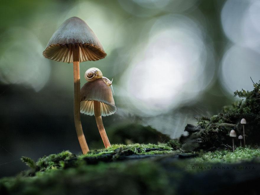 fotografia-funghi-interessanti.03